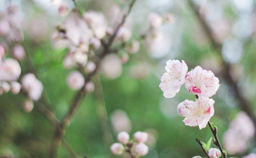 #40 Japan's 72 micro-seasons vol.1